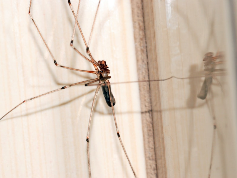 Photo of Ova biljka tjera pauke iz kuće