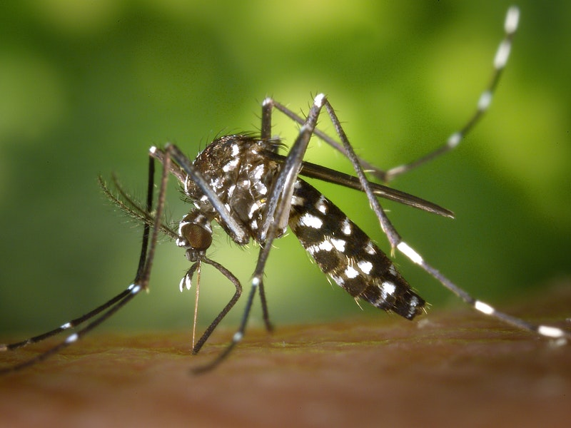 Photo of Koji su simptomi virusa Zapadnog Nila?