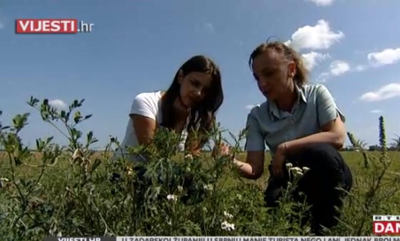 Photo of VIDEO Kazne za neuklanjanje ambrozije i do 30.000 kuna