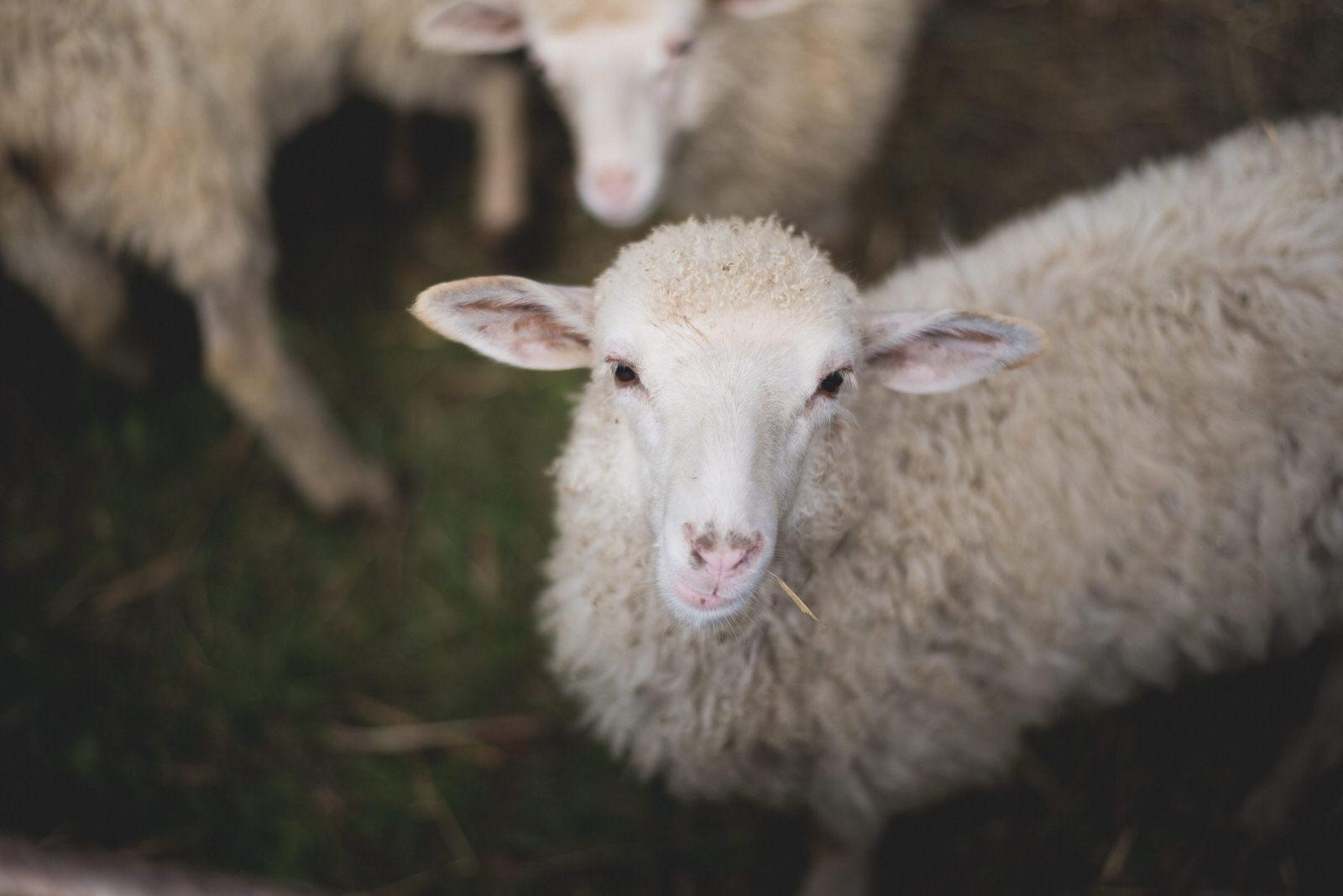Photo of Više od 2 milijuna kuna stiže malim poljoprivrednicima u Ličko-senjskoj županiji