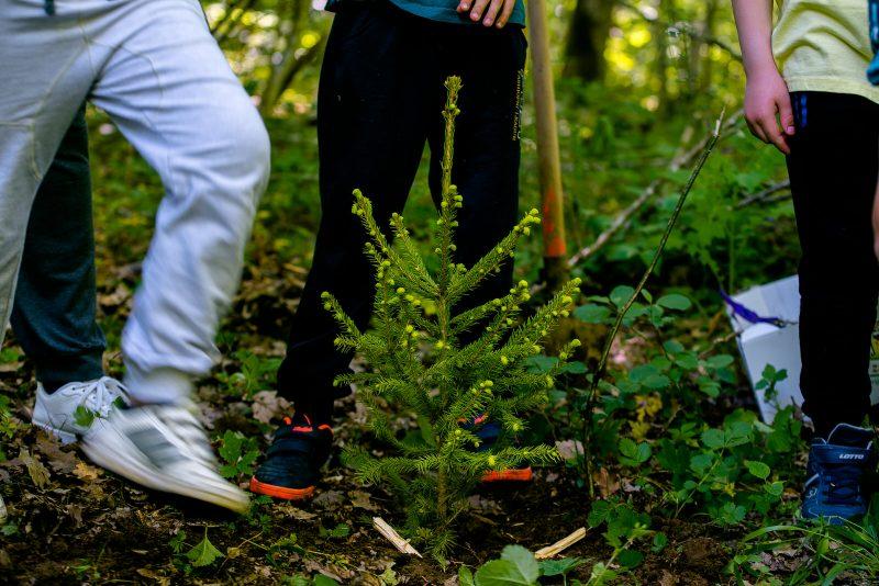 OVOG PETKA I SUBOTE Pridružite se kolektivnoj sadnji drveća u Gospiću!
