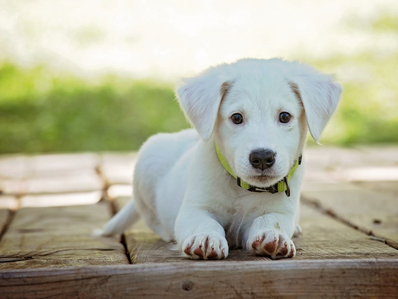 NEPOTREBAN TROŠAK Odzvonilo je prekomjernom cijepljenju pasa