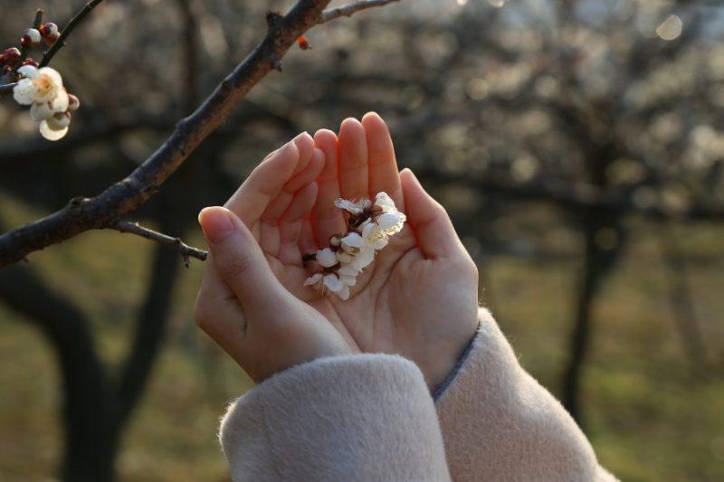 """KOLEKTIVNA SADNJA I U LICI """"Od mene za prirodu"""" parfema Plitvice sadi šljive – otkrijte gdje!"""