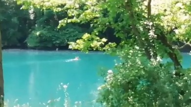 Photo of VIDEO Medvjedi su dobri plivači – dokaz je video iz Nacionalnog parka Una!