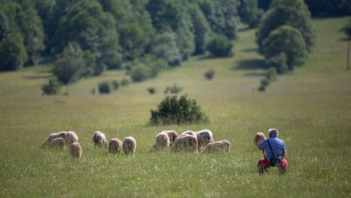 Photo of Poljoprivrednicima diljem Hrvatske 130 ugovora za potpore vrijedne više od 45 milijuna kuna