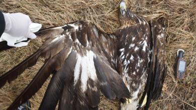 Photo of BalkanDetox LIFE: Novi projekt protiv ilegalnog trovanja divljih životinja