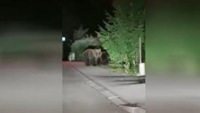 Photo of VIDEO U Delnicama je u šetnji ulicama snimljena medvjeđa obitelj – pogledajte video!