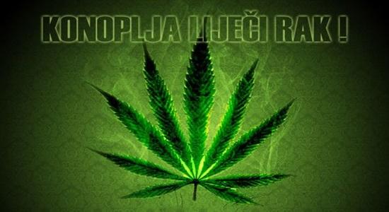 Photo of Ministarstvo zdravlja RH priprema legalizaciju marihuane?