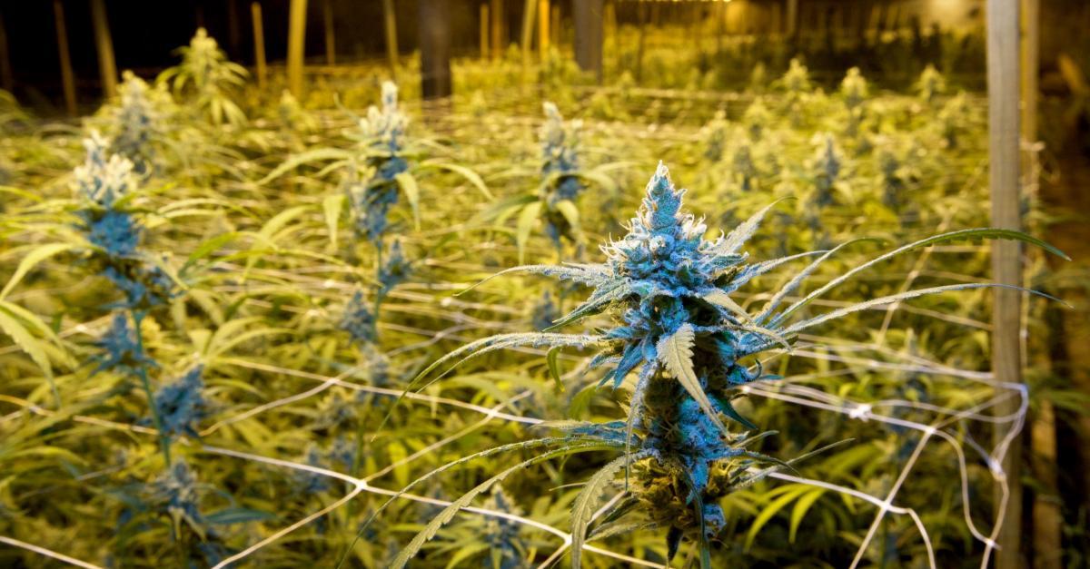 Photo of Jednoglasna preporuka Ministarstva zdravlja: Medicinsku marihuanu legalizirati u Hrvatskoj