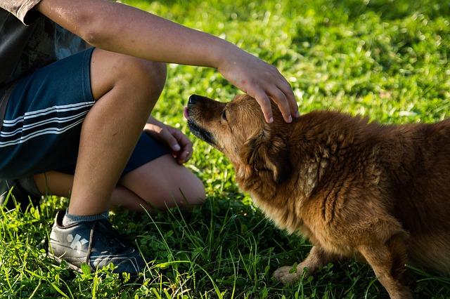 Psi mogu prepoznati emocije
