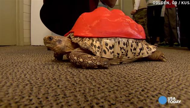 Photo of 3D printerom kornjači napravili novi oklop