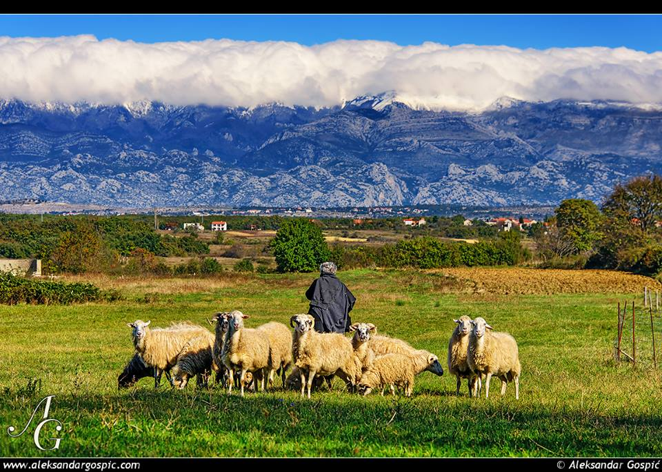 Photo of Neolitički VELEBITSKI PASTIRI: Prva stada i pripitomljene ovčice