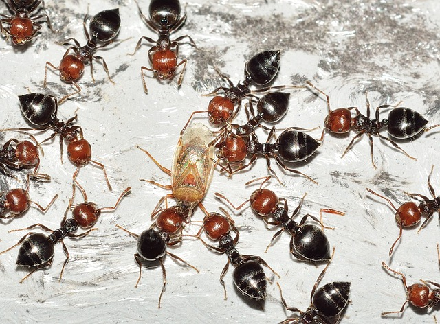 Photo of Mravi farmeri – ljudi nisu jedina vrsta koja uzgaja druga živa bića radi hrane