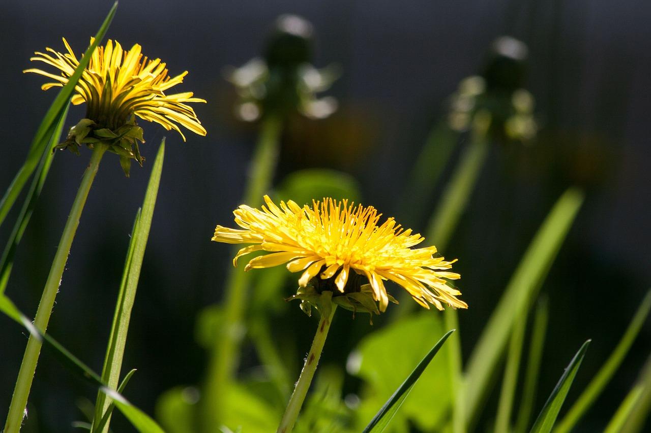 Photo of Cvijeće koje slobodno možete jesti