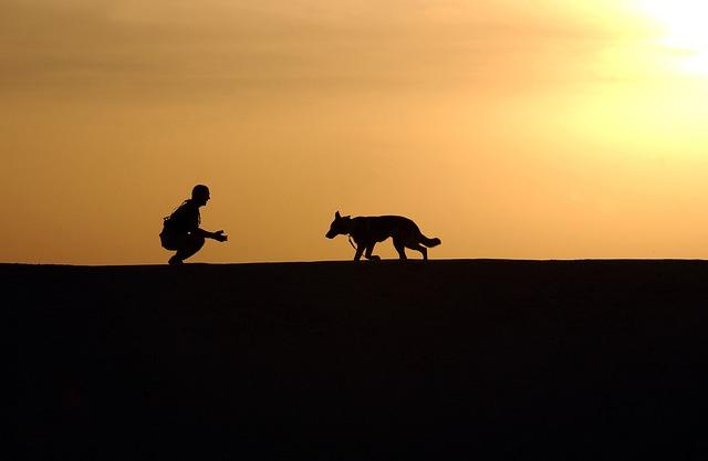 Photo of Znanstvenici otkrili kako postoje biokemijski dokazi ljubavi čovjeka i psa