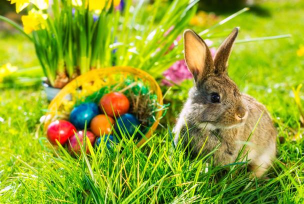 Photo of Zašto uskrsni zec nosi jaja u gnijezdo, a ne kokoš?
