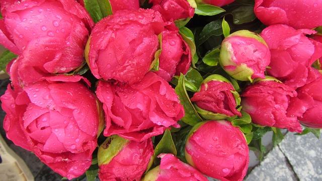 Photo of Omiljeni cvijet otkriva karakter
