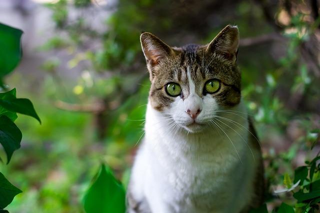 Photo of Mačke nam donose svoj plijen jer nas pokušavaju naučiti loviti