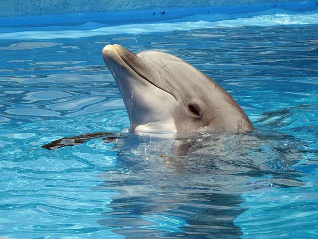 Photo of Uz aplikaciju CROdolphin_little pomognite u očuvanju zaštićenih vrsta