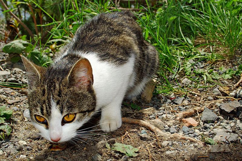Photo of Mačke ne vole visoke tonove