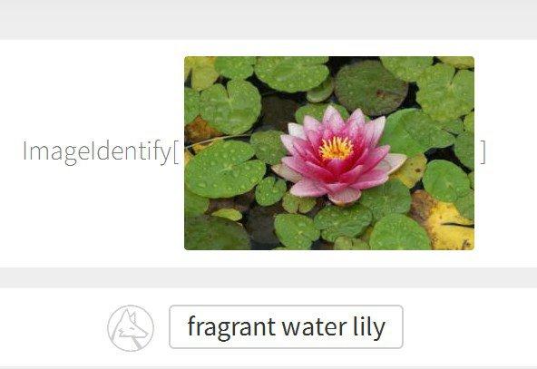 Photo of The Wolfram Language: Stranica koja će identificirati gotovo svaku sliku