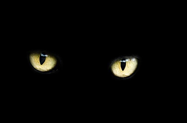 Photo of Ova tekućina, kad se ubrizga u oko, omogućava vid u mraku