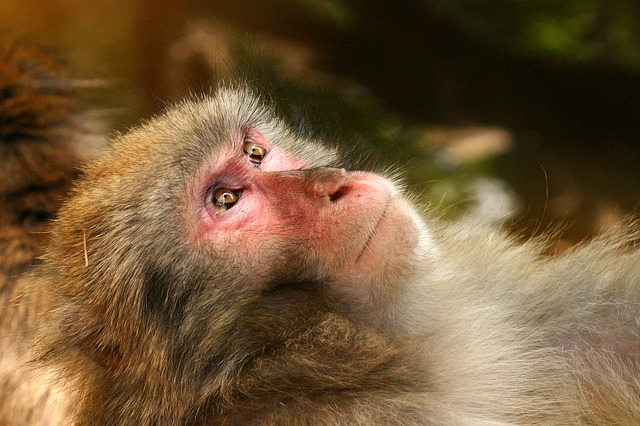 Photo of Majmuni ne vole poglede posjetitelja u zoološkom vrtu