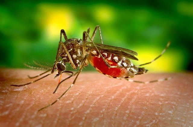 Photo of Ovako reagiramo na ubode komaraca