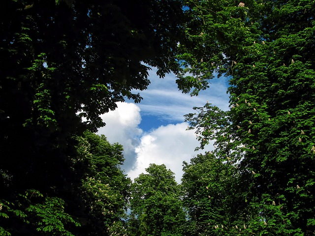 Photo of Sve dobrobiti života pored drveća