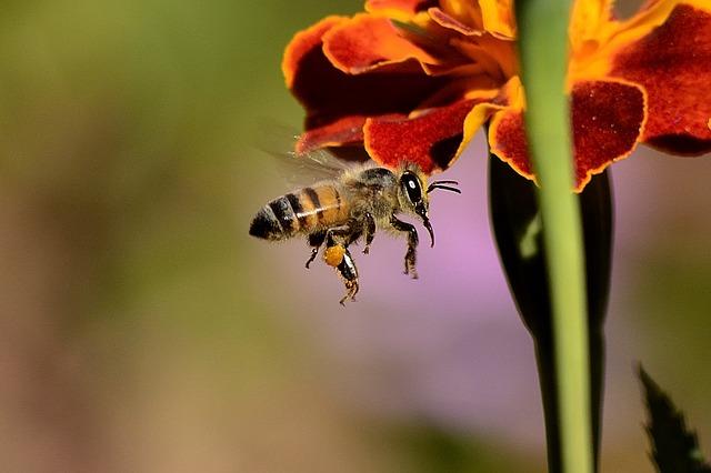 Photo of Uz pomoć suvremene tehnologije znanstvenici pokušavaju otkriti zašto pčele odumiru