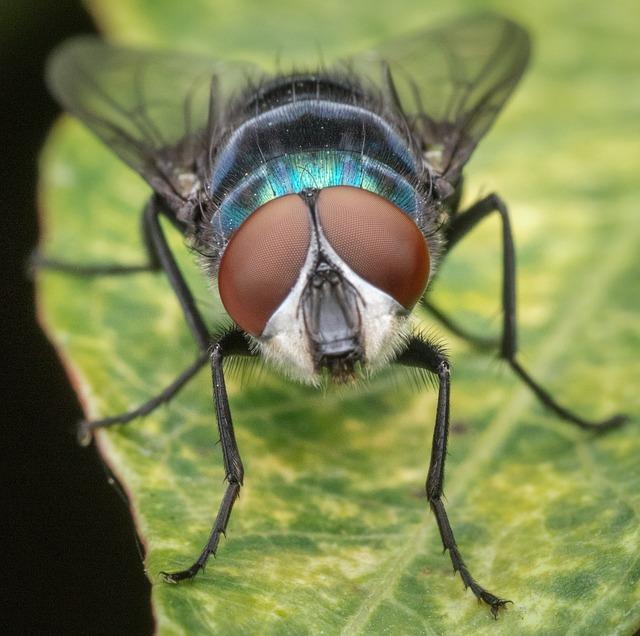 Photo of Riješite se u trenu dosadnih muha