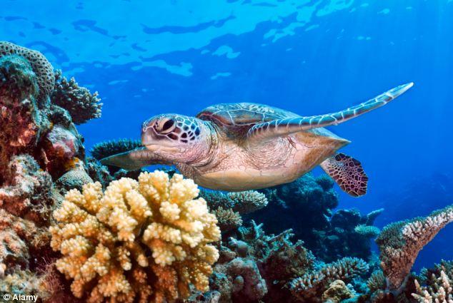 Photo of WWF objavio: mora su u opasnosti