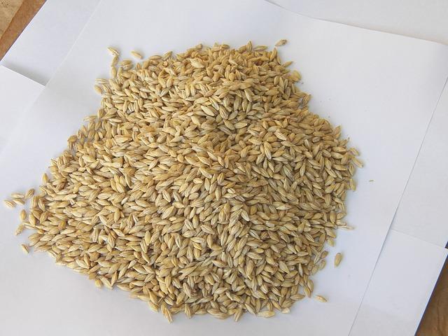 Photo of Ječam – hrana gladijatora
