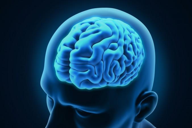 Photo of Ljudi koji govore više jezika imaju veći mozak?