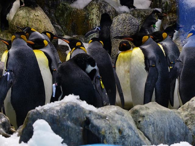 Photo of Otok gdje vladaju pingvini