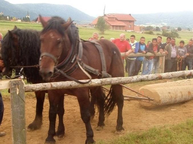 Photo of Brinje: Natjecanje u šlajsu trupaca