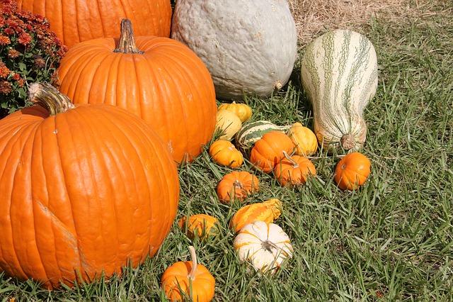 Photo of Uživajte u plodovima jeseni!