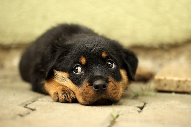Photo of Zašto ne možemo odoljeti mačićima i štencima
