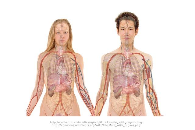 Photo of Znanstvenici nisu sigurni postoje li ove 4 stvari u ljudskom tijelu