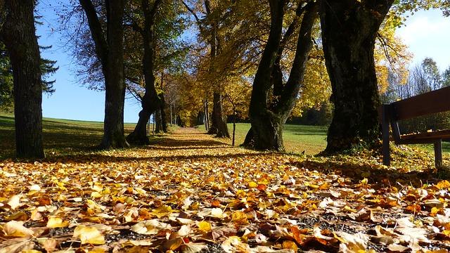 Photo of Vremenska prognoza: Kakva nas jesen očekuje?