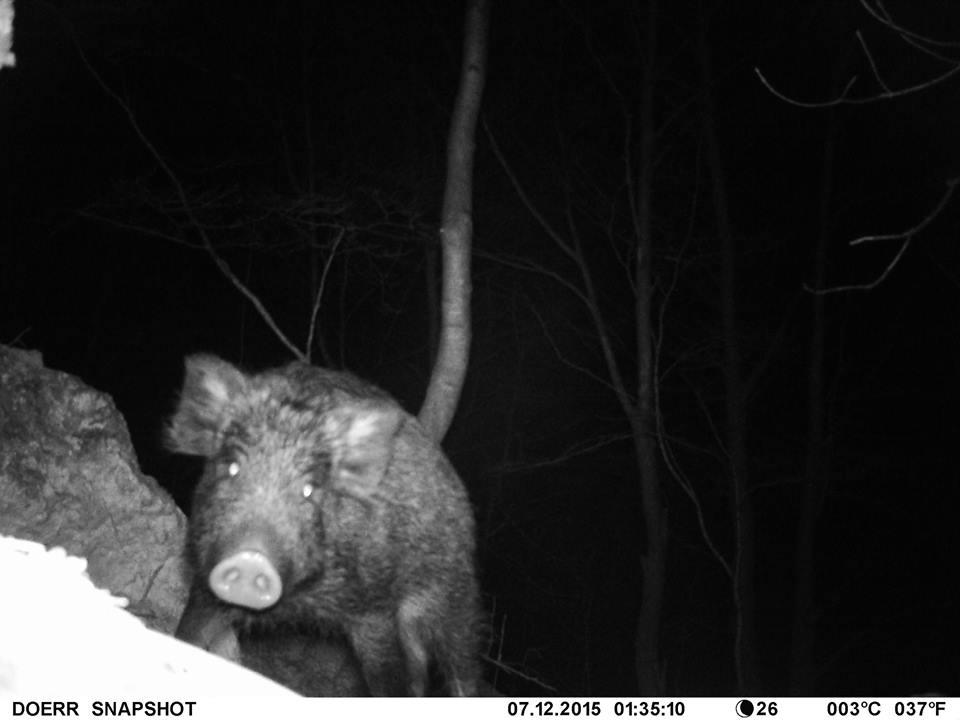 Photo of Noćne fotografije životinja u NP Sjeverni Velebit