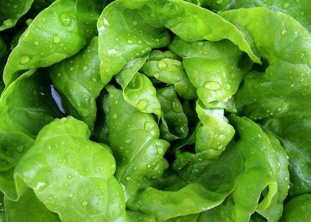 Photo of Zbog ovoga ćete češće jesti zelenu salatu i kelj