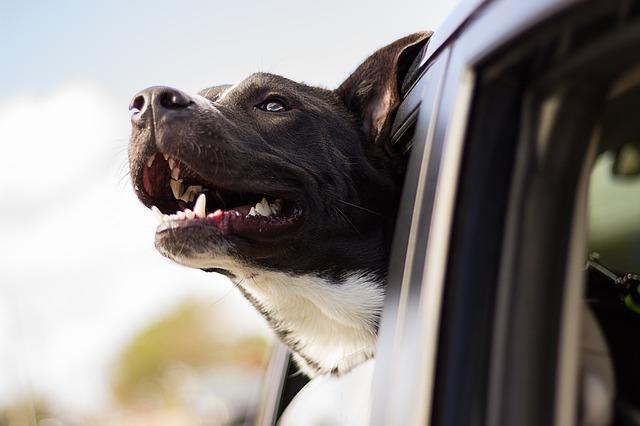 Photo of Savjeti za putovanje sa psom bez stresa