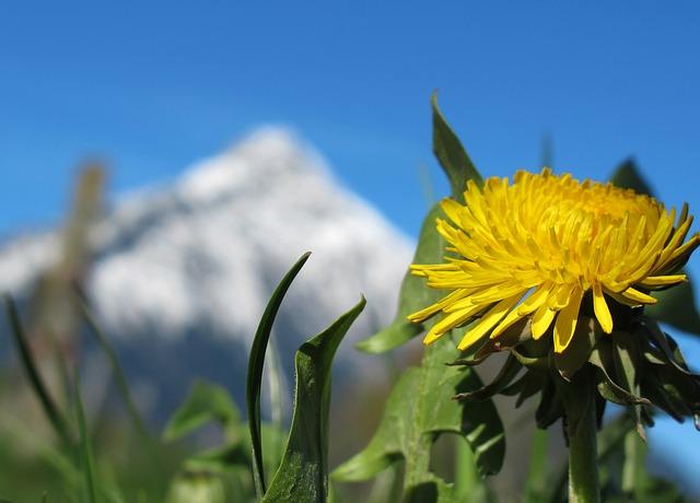 Photo of Kakvo nas vrijeme očekuje ovog proljeća?