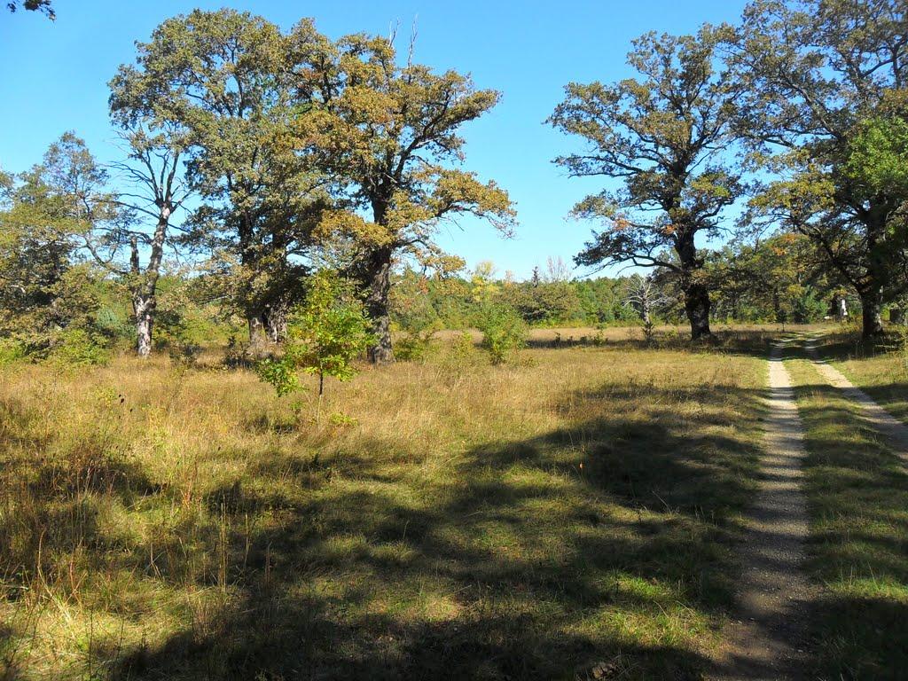 Photo of Laudonov gaj na KRBAVSKOM polju živi je spomenik šumarstva Gacke, Like i Krbave