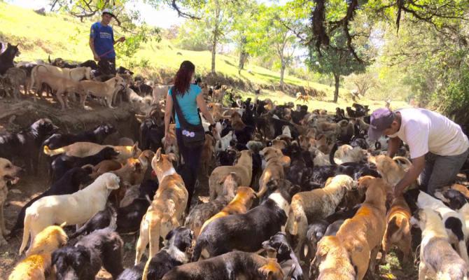 "Photo of ""Zemlja lutalica"": Raj za pse u Kostariki"