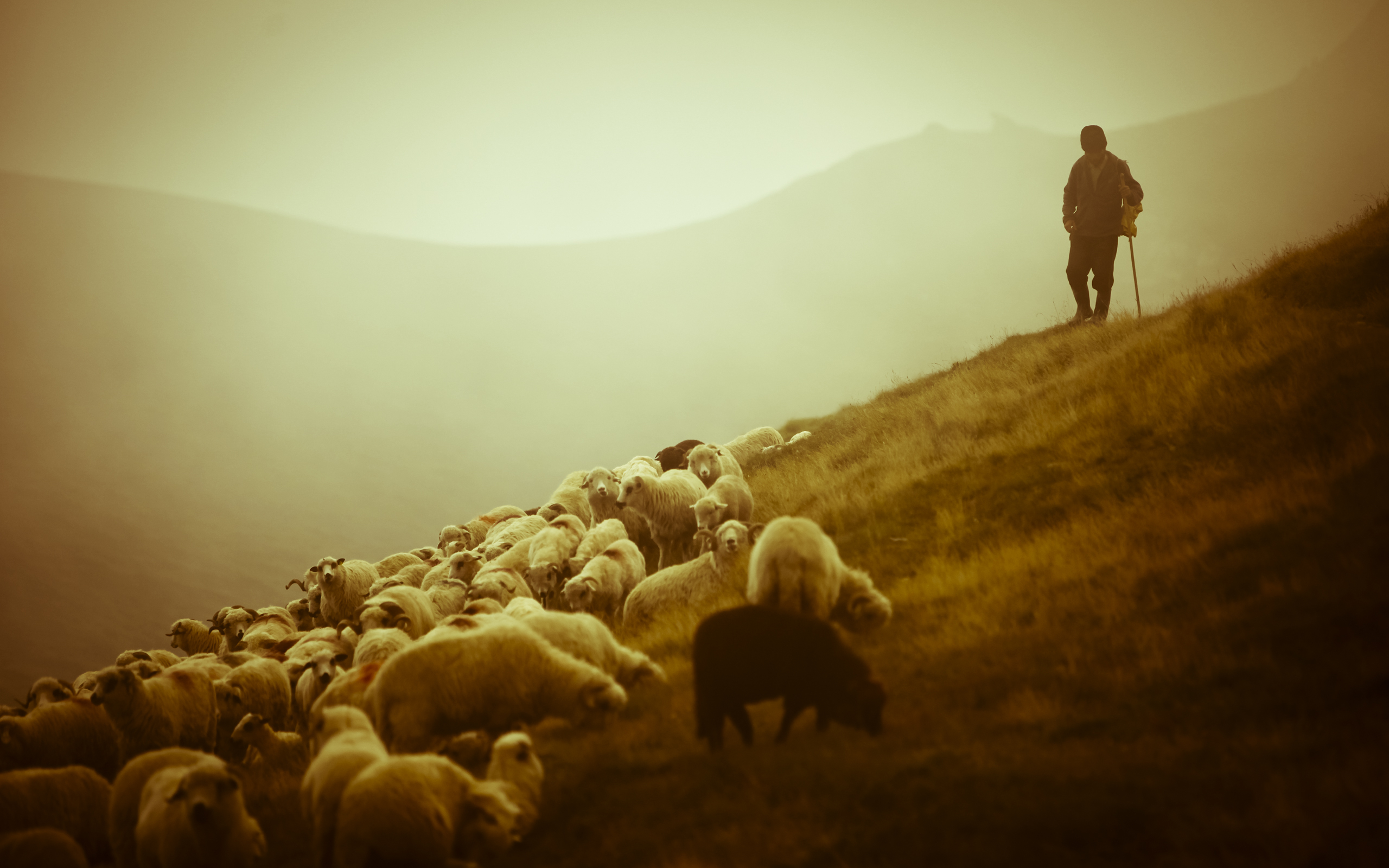 Photo of Za posao pastira u Sloveniji se javilo 3.000 ljudi, među njima i američki milijunaš