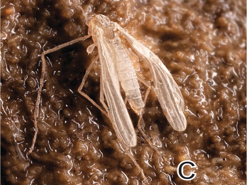 """Photo of U utrobi VELEBITA pronađena prva podzemna životinjska vrsta s krilima – """"Špiljska Hajdi""""!"""