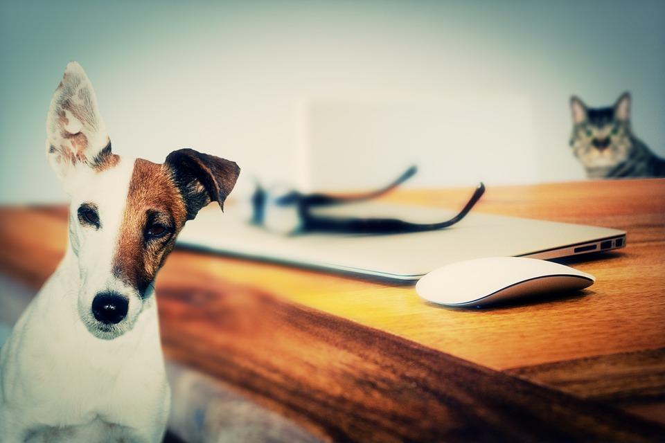 Photo of Psi mogu imitirati pse