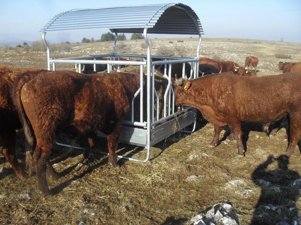 Photo of U Perušiću sa uzgoja stada ovaca prešao na krave – Salers isplativiji